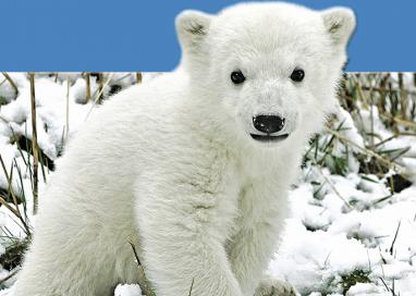 Knut é homenageado com estátua por zoológico na Alemanha